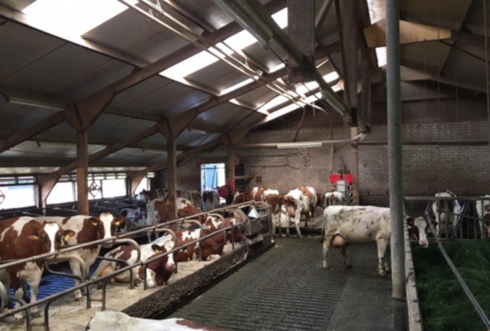 MeadowFloor Renovierung für Familie Cornelissen in Oploo (NL)